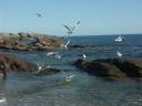 Quiberon, plage du Goviro